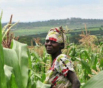 The African Food Security Network