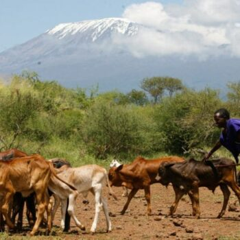 IN THE PRESS: Romantic visions of pastoral Africa won't solve urban food insecurity