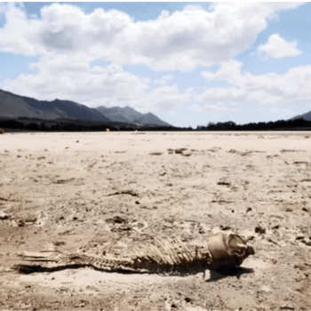 IN THE PRESS: Vital lessons learnt from the drought
